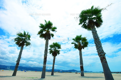 片男波ビーチのやしの木と空の素材 [FYI00243298]