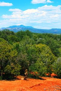 アリゾナの赤い土とジュニパーの森の素材 [FYI00243303]
