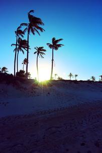 ヤシの木と夕日と風の素材 [FYI00243307]