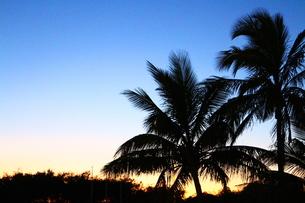 夜明け前のヤシの木の素材 [FYI00243311]