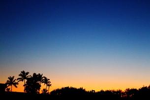 朝焼けの空とヤシの木の写真素材 [FYI00243317]