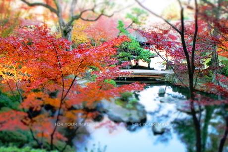 和歌山城の紅葉渓庭園の橋の素材 [FYI00243319]