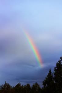 虹とジュニパーの森(タテ)の素材 [FYI00243325]