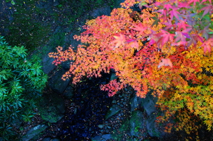 重なる紅葉のグラデーションと川。の写真素材 [FYI00243328]