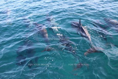 イルカの背びれの素材 [FYI00243329]