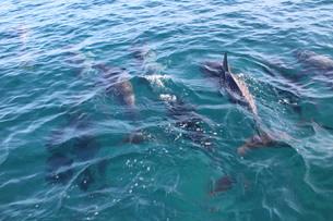 イルカの背びれの写真素材 [FYI00243329]