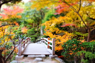 和歌山城の紅葉渓庭園の橋2の素材 [FYI00243330]