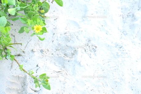 白いビーチと黄色い花の素材 [FYI00243333]