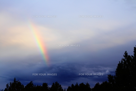 ジュニパーの森と虹(左)の素材 [FYI00243335]