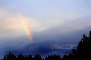 ジュニパーの森と虹(左)の写真素材 [FYI00243335]