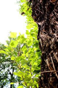 樹木の写真素材 [FYI00243444]