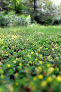 一面の草と風景 の素材 [FYI00243451]