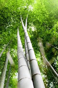 竹林の写真素材 [FYI00243477]