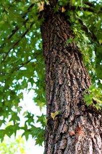 樹木の写真素材 [FYI00243525]