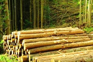 森林伐採の写真素材 [FYI00243609]