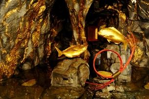鯛生金山の鯛の写真素材 [FYI00243613]