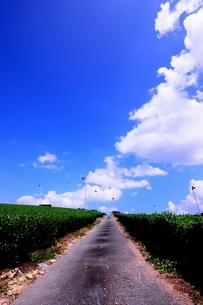 八女中央大茶園 茶畑の素材 [FYI00243634]
