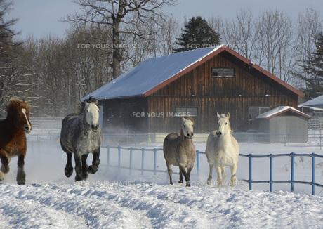馬追い運動④の写真素材 [FYI00244170]