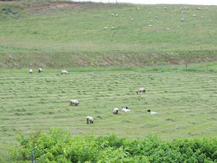 羊牧場①の素材 [FYI00244204]