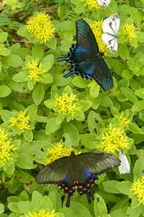 黄色い花とカップル②の写真素材 [FYI00244315]