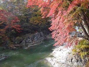紅葉と利根川の写真素材 [FYI00244338]