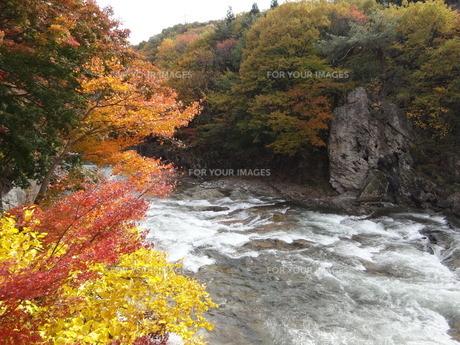諏訪峡の紅葉の素材 [FYI00244339]