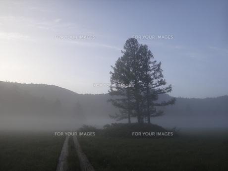 尾瀬の朝靄の素材 [FYI00244349]