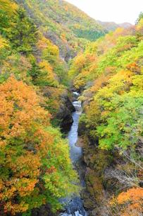 片品渓谷の秋の素材 [FYI00244396]