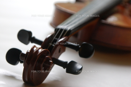 バイオリンの写真素材 [FYI00244474]