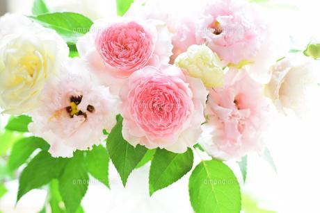 薔薇ヒカルのアレンジ横構図の写真素材 [FYI00244527]