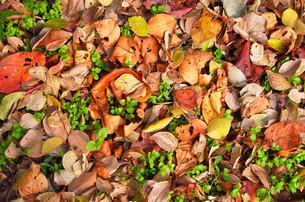 カラフルな落ち葉の写真素材 [FYI00244548]