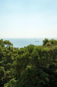 梢越しの海の写真素材 [FYI00244560]