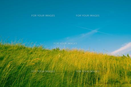 草原と飛行機雲の素材 [FYI00244561]