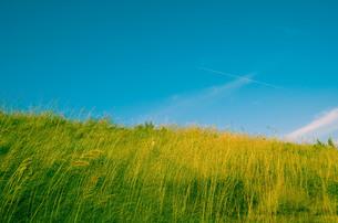 草原と飛行機雲の写真素材 [FYI00244561]