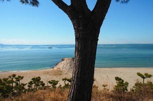 松と海の写真素材 [FYI00244566]