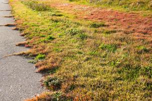 路傍の秋色の写真素材 [FYI00244581]