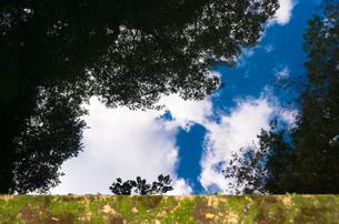水鏡の空と森の写真素材 [FYI00244585]