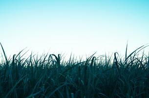 薄明の草原の写真素材 [FYI00244586]