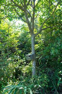 森の巣箱の写真素材 [FYI00244587]