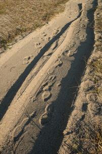 浜辺の轍の写真素材 [FYI00244603]