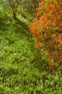 野原と紅葉の写真素材 [FYI00244611]
