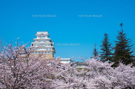 春の姫路城の写真素材 [FYI00244643]