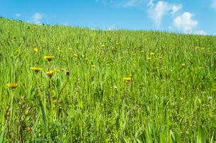 春の野原の写真素材 [FYI00244651]