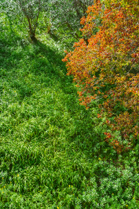 秋の草原の素材 [FYI00244693]
