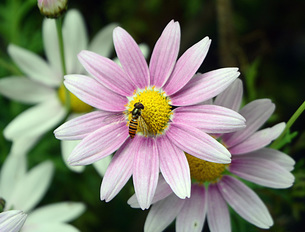 花とアブの写真素材 [FYI00244760]