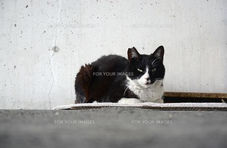 A cat aloneの写真素材 [FYI00244797]