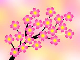 桜の花の写真素材 [FYI00245012]