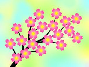 桜の花の写真素材 [FYI00245023]