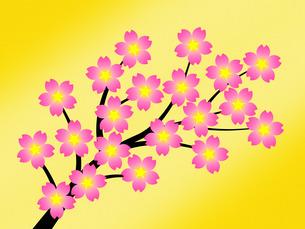 桜の花の写真素材 [FYI00245024]