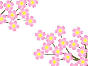 桜の花の写真素材 [FYI00245036]